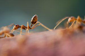 La formaldeide deriva dall'acido formico, prodotto naturalmente dalle formiche